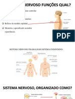 Slide Sistema Nervoso