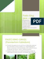 PASTO KING GRASS.pptx 2.pptx