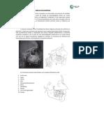Apostila de Ortodontia (Resumos)