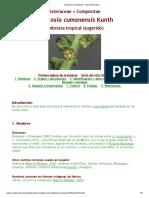 Ambrosia Cumanensis - Ficha Informativa