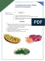 Actividades Prácticas de Introducción a La Biología-célula