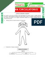 Sistema Circulatorio Para Primero de Primaria