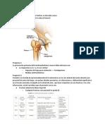 Repaso ortopedia