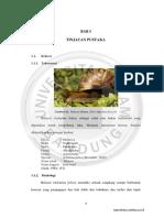 05bab1_ainaro_10060311167_skr_2015.pdf