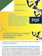 Cómo Se Heredan Los Genes