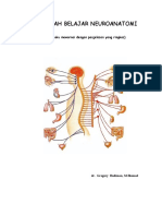 Neuro Anatomi