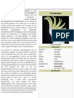 Cacatuidae - Wikipedia, La Enciclopedia Libre