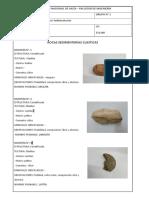 TP N°3 Rocas Sedimentarias