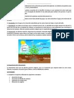 FICHA La Fotosíntesis Es El Proceso de Elaboración de Los Alimentos Por Parte de Las Plantas
