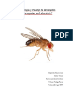 Informe Sobre la Mosca Drosophila Melanogaster
