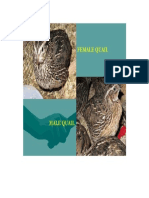 Difference Between Quails