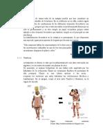 TEXTILERIA Y ORGANIZACION SOCIAL CASMA