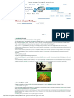 Mercado Del Aguaje (Perú) (Página 2) - Monografias.com