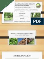 Funciones productivas de la Agroforestería