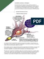 generalidades anatomicas y fisiologicas