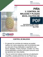 USAID_RED_5_Piña_Malezas_Plagas_03_06.ppt