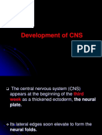 Development of CNS