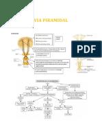 Fisiopatologia Neuro