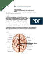 DIENCÉFALO II Prueba de Neurofisiología 2016