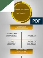 membran eritrosit