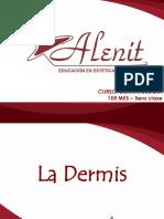 3.- LA DERMIS (1).ppt