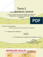 Metabolismo central