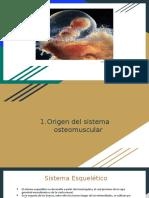 SISTEMA OSTEOMUSCULAR.pptx