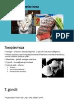 CURS. TOXOPLASMOZA.pdf
