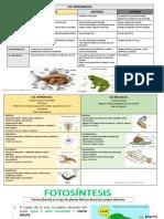 tabla-animales-vertebrados.pdf
