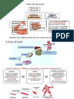 Tipos-de-células-6º.pdf