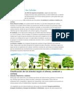 Clasificacion de Los Arboles y Plantas