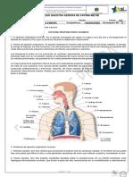 Guia de Lectura Del Sistema Respiratorio