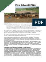 Modulo porcicultura