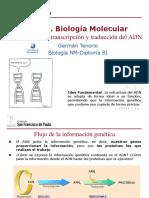 Biologia Adn