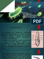 PROTOZOOS.odp.pdf