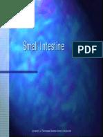 INTESTIN SUBTIRE - OK Engl.pdf
