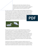 Patos wiki