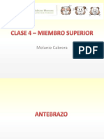 Clase 4 – Miembro Superior