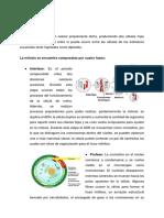 407937385-Laboratorio-Mitosis.pdf