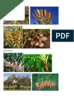 Plantas Nativas Del Perú