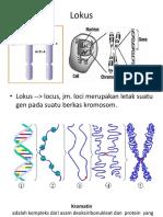 lokus+kromosom homolog+ kromatid saudara.pptx