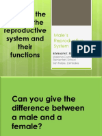 Parts and Description of the Male Reproductive System