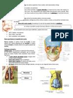 Resumen de anatomía respiratoria