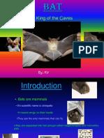 Bat(Liliacul-prezentare in Engleza)