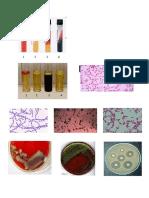 Media Pertumbuhan Bakteri