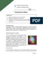 Ciclo Celular Mitosis, observación y preparación de láminas