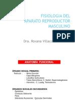 FISIOLOGIA APARATO REPRODUCTOR MASCULINO