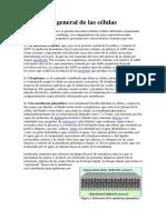 Estructura General de Las Células