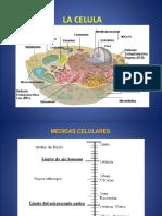 Biologia Celular 3 (2016)