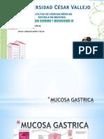 Mucosa Gastrica